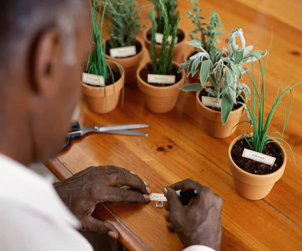 Man participating in senior horticultural therapy
