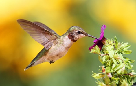 Family of Hummingbirds Make The Hacienda Their New Home
