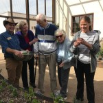 Memory Care guests harvest produce 2/13/2017
