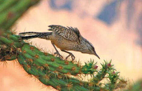 May 2018 Thrive Newsletter and Calendar for Desert Willow