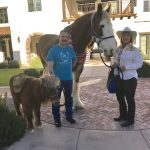 Jumpin' Jack the Clydesdale and Snickers the Mini posing for our residents and guests.